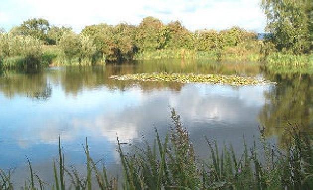 Carleton Hill Fishery