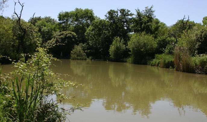 Orchard Lakes