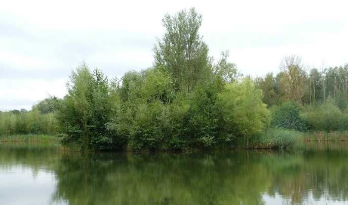 Theale Carp Lake